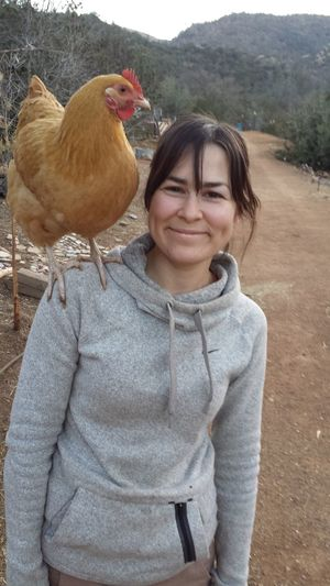 Free range chicks. Friendship Nature Wild Things Country Life Love Companionship Bird Portrait Smiling Rural Scene Agriculture Happiness Looking At Camera Standing Poultry Hen Friend Chicken - Bird Pets Pet Owner Chicken