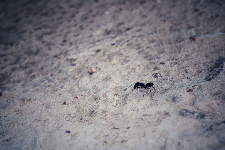 High angle view of ant on the ground