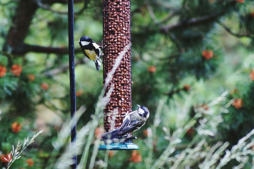 Sweden Nature Sweden EyeEm Birds Bluetit Blåmes Fine Art Photography Home Is Where The Art Is Björkvik Swedish Nature Colour Of Life Two Is Better Than One 2016 Juni Niklas My Year My View BYOPaper! The Week On EyeEm Perspectives On Nature