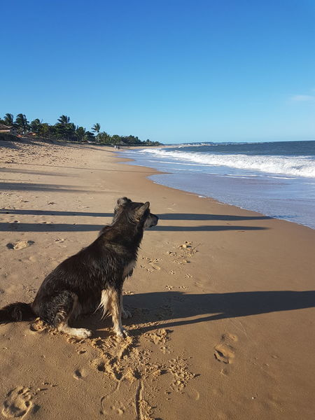 Thinking Animal Themes Beach Beauty In Nature Clear Sky Day Dog Domestic Animals Horizon Over Water Mammal Nature No People One Animal Outdoors Pets Sand Sea Sky Sunlight Thinking About Life Water