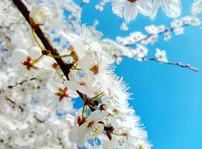 EyeEm Selects Flower Branch Outdoors Beauty In Nature Fragility Tree Close-up Day Nature No People Sky Bloom Blossom