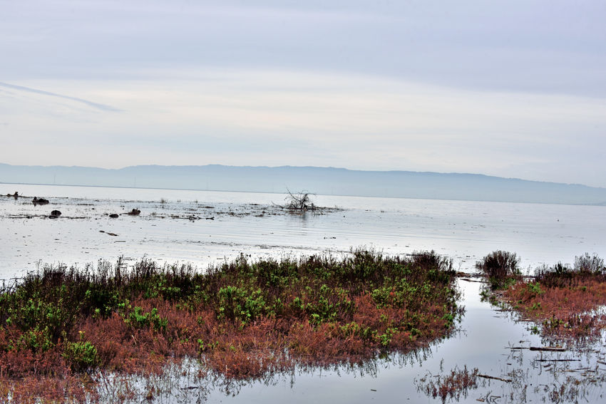 Hayward Regional Shoreline 3 San Lorenzo, Ca. Tidal Wetlands Marsh San Francisco Bay San Lorenzo Creek Terminates Here Fresh Water Meets Salt Water Bird Habitant Silhouettes Marin Headlands Horizon Over Water Land Used For Salt Production 1850-1980's Bayview Reflections Reflections In The Water Nature Beauty In Nature Nature_collection Landscape_Collection Landscape_photography Early Morning Water Tranquility Scenics