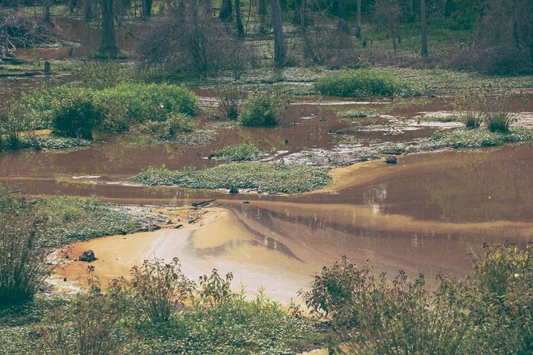 Getting all sedimental Sedimentary Sediment Current Wetlands Nature EyeEm Nature Lover
