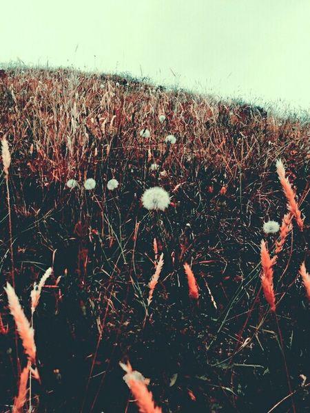 Nature On Your Doorstep Diente de León Mountain Cooling  Neblina Dandelions Lovemountains