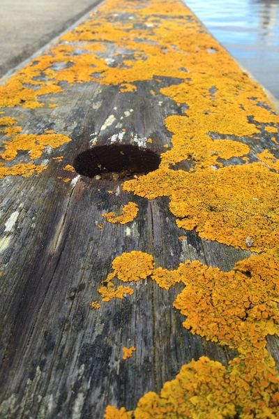 Lichen on the pier Yellow Wood - Material Textured  Outdoors Sea Beauty In Nature