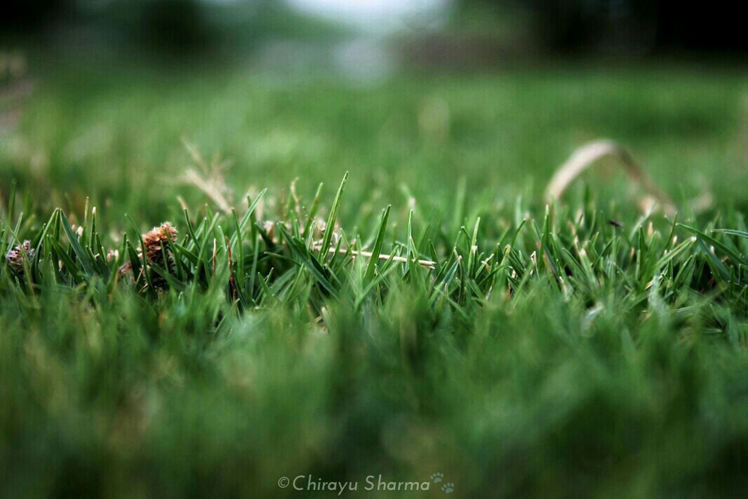 grass, field, green color, growth, selective focus, grassy, nature, plant, focus on foreground, beauty in nature, tranquility, blade of grass, close-up, green, day, landscape, outdoors, no people, meadow, surface level
