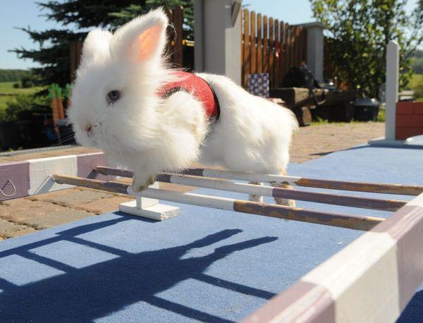 Kaninchen Kaninchen Animal Parcours Rabbit Rabbit Sport Springen Springend Springtime