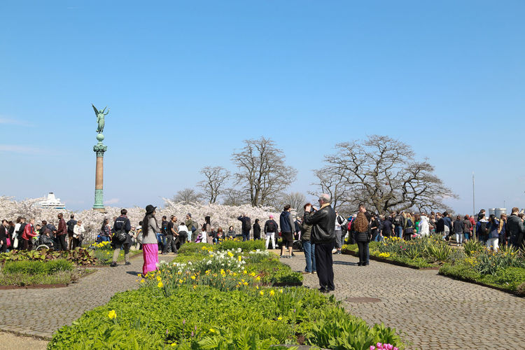 Showing people visiting the sakura festival in Copenhagen ,Denmark 2018 Sakura Festival Statue Tourists Adult Clear Sky Copy Space Crowd Day Flower Group Of People Growth Large Group Of People Leisure Activity Lifestyles Men Nature Outdoors Plant Real People Sakura Blossom Sky Spring Tourism Tree Women