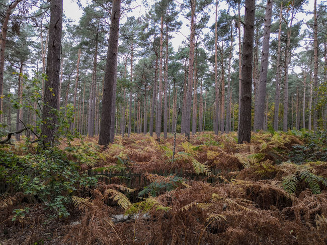 British woods Honor 10 United Kingdom Tree Forest Branch Tree Trunk WoodLand Sky Grass Growing Dense Sightseeing Young Plant Soil Woods