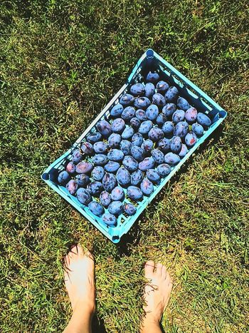 Grass Human Foot Fruit Summertime Feets Plums