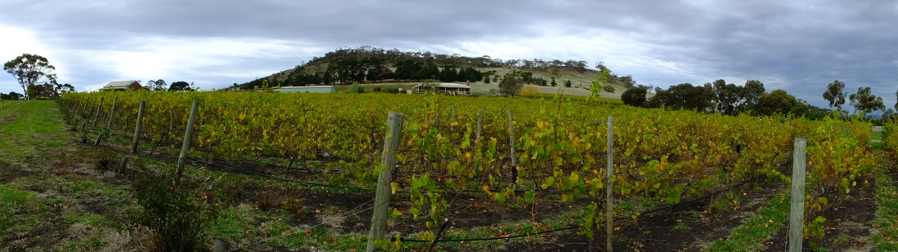 Melancholic Landscapes The Calmness Within Winery
