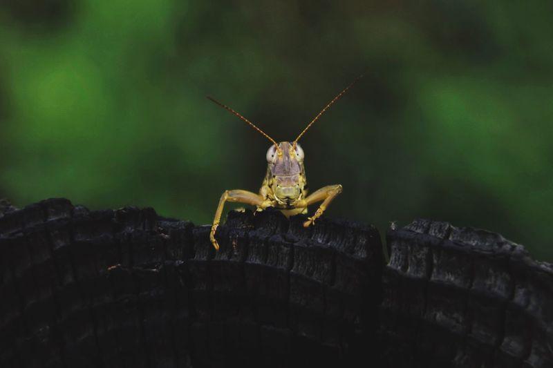 Grasshopper after rain. Grasshopper Texas Belton Texas Beltonbygodtexas Lustforlife