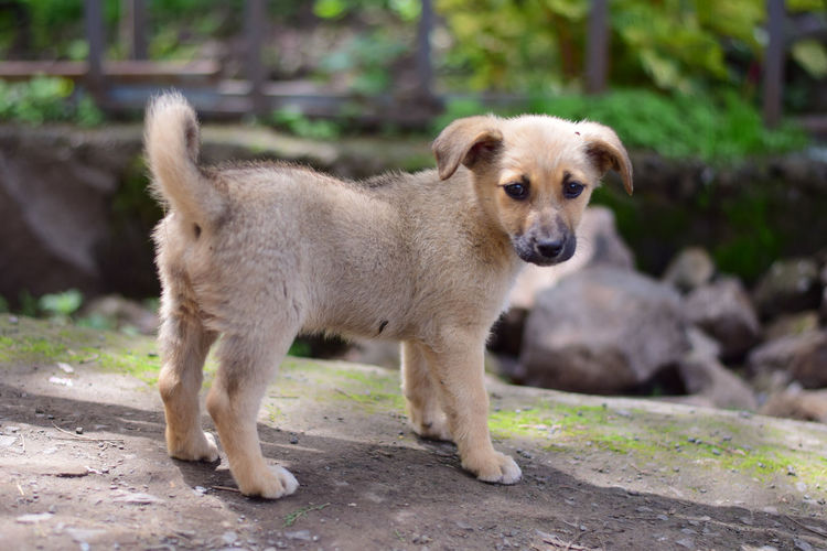 Puppy love Dogs Dogs Of EyeEm EyeEm Best Shots Puppy Love Canine Day Dog Dog Love Domestic Domestic Animals Focus On Foreground Full Length Looking At Camera Mammal No People One Animal Pets Portrait Puppy Standing Vertebrate Young Animal