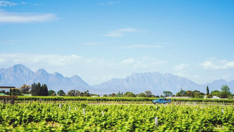 The breede valley wine routes Agriculture Farm Crop  Field Growth Rural Scene Cultivated Land Nature Scenics Beauty In Nature Landscape Mountain Tranquil Scene Vineyard Day Sky Tranquility Farmer Outdoors Winemaking Vineyards  Wine Farm Wine Fields Nikonphotography EyeEmNewHere Be. Ready.