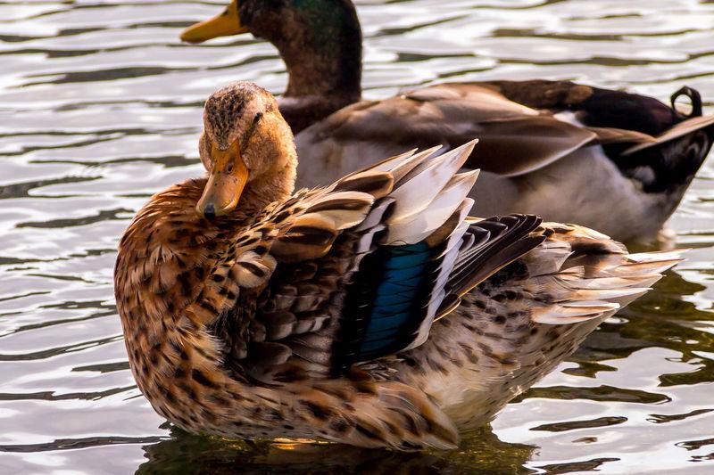 Animal Animal Behavior Animals In The Wild Day River