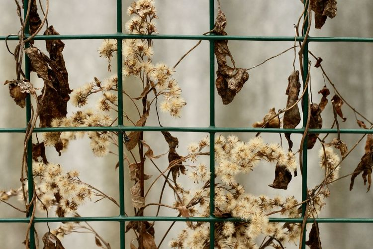 No People Plant Focus On Foreground Nature Close-up Dry Outdoors Leaf Plant Part Backgrounds Pattern Full Frame Beauty In Nature Metal Plant Stem Dried Plant Growth Fence Background Abstract Pattern, Texture, Shape And Form Springtime Decadence