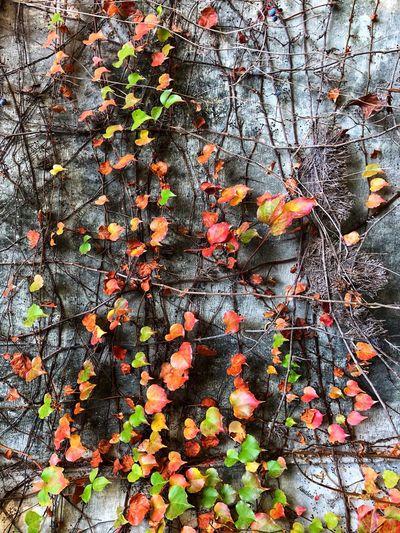 Leaves Full