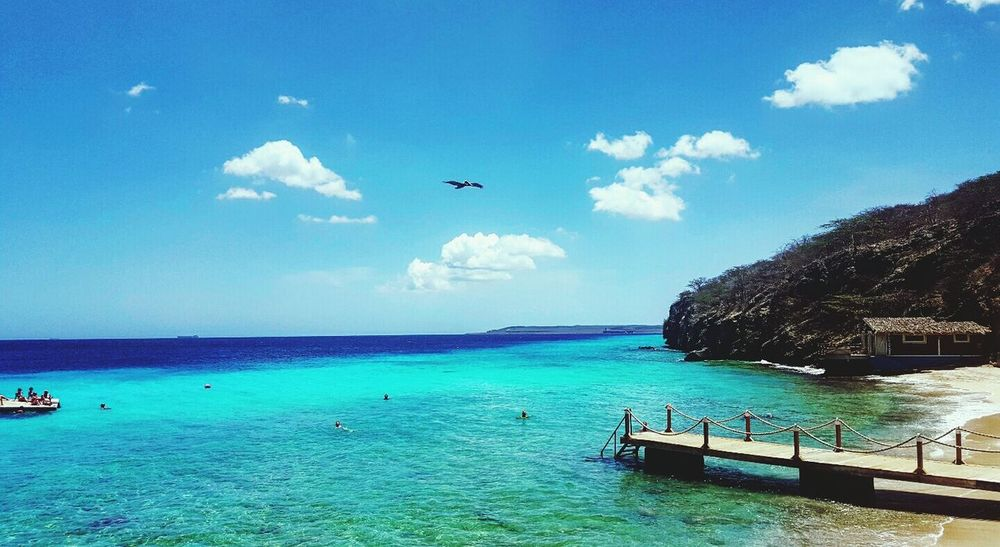 Take me back to Paradise. Curacao Sea Blue Bird Outdoors Water Nature Beach Sky Travel Traveller Tropical Paradise Earth Beautiful Bluesky Ocean Vacation Caribean Caribbean Sea Summer Takemeback Travel Destinations Photography Day