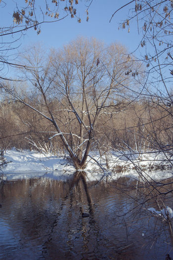 Beauty In Nature Cold Temperature Day Lake Landscape Nature Sky Snow Tree Water Waterfront Winter