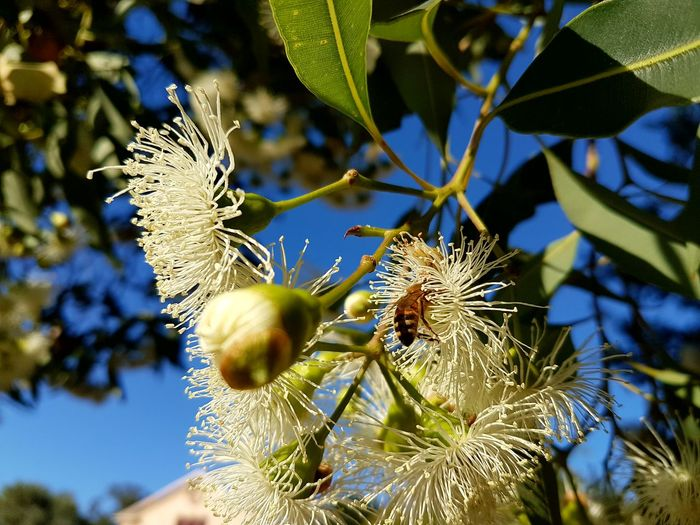 Growth Fruit Close-up Nature No People Tree Green Color Beauty In Nature Outdoors Freshness Bee Collecting Pollen