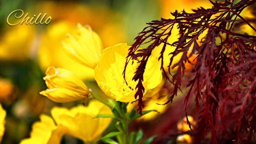 Good morning Flowers Flowerporn EyeEm Nature Lover Eye4photography  The Purist (no Edit, No Filter) Sony A6000 Beauty Nature EyeEm Best Shots Urbanphotography