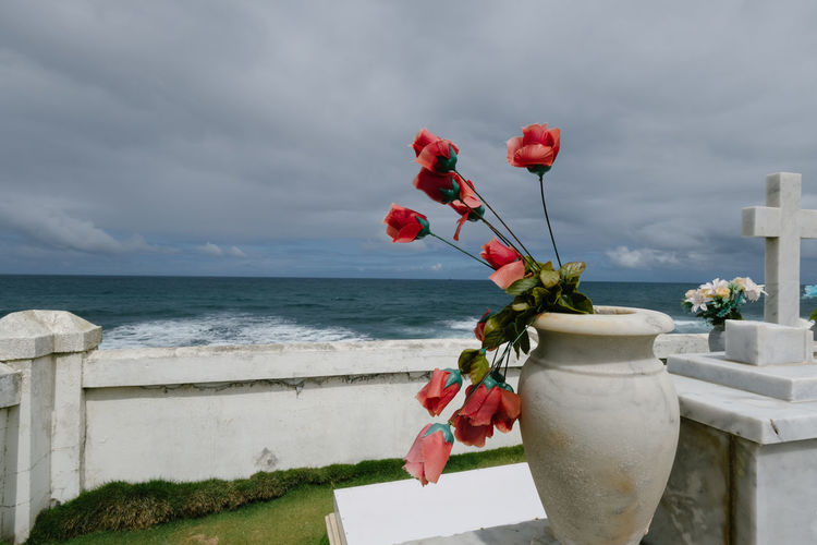Close-up of red flowering plant against sea