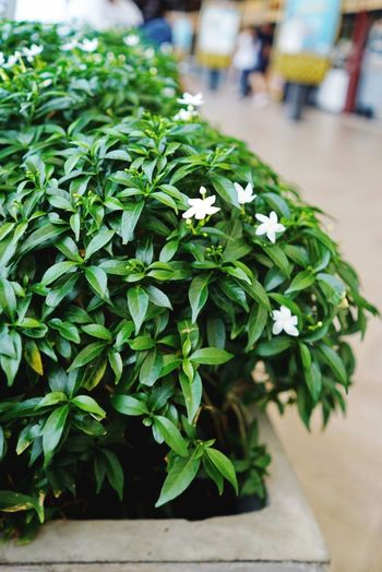 Green Color Leaf Plant Focus On Foreground Freshness Day Growth Close-up Outdoors Nature Fragility Flower Beauty In Nature No People Flower Head