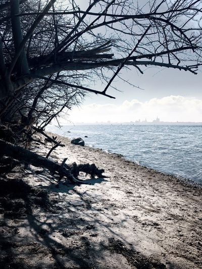 Sea Sky Nature Water Tranquility Beauty In Nature Tranquil Scene Horizon Over Water Scenics Tree Outdoors No People Bare Tree Day Built Structure Beach Branch Aktefähr Insel Rügen Rügen Rug