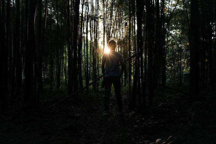 Man standing against trees during sunset