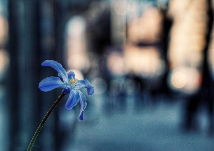 Congratulations to my self! 2019 Niklas Storm April Flower Head Flower Blue Petal Close-up Purple My Best Photo