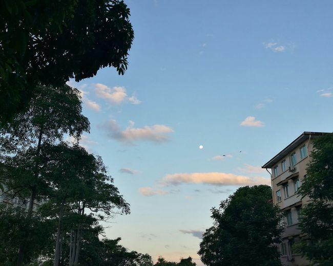 Creamy Monday Cloud - Sky