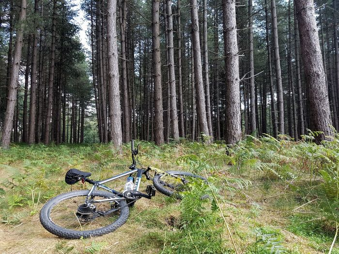 Mountain Biking in Thetford Forest Trail Trees Ferns Cycling Thetford MTB Biking Plant Tree No People Day Nature Green Color Land Bicycle Outdoors Tranquility Forest Sunlight Grass This Is Strength