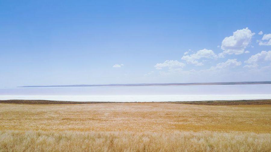 salt lake and flavescent grass Salt Lake Salt Cereal Plant Rural Scene Agriculture Summer Field Blue Crop  Sky Landscape Rye - Grain Harvesting Farmland Corn - Crop Corn Sweetcorn Corn On The Cob My Best Photo