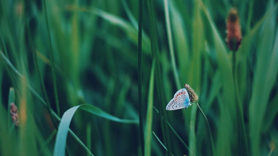 Insect Animals In The Wild One Animal Animal Themes Fujifilm_xseries Green Color Animal Wildlife Damselfly Day Nature Leaf Focus On Foreground Outdoors No People Close-up Grass Perspectives On Nature