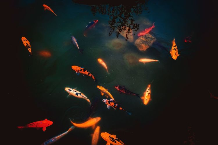 koGalaxyi No People Fish Sea Life Astronomy Animal Themes Close-up Star - Space Swimming UnderSea Water Outdoors Large Group Of Animals Beauty In Nature Scenics Night