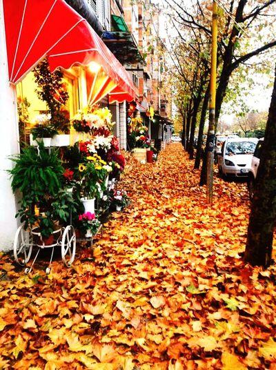 Autumn Autumn Colors Autumn Leaves Autumnbeauty Tirana Outdoors Leaf Nature City No People Day Albania