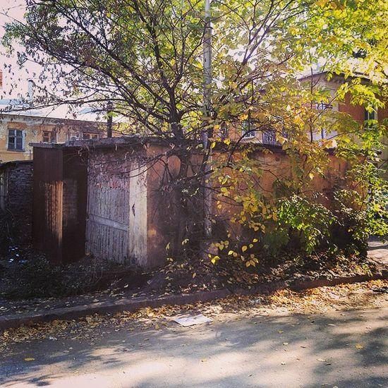 Самара осень листья асфальт блики день город дерево здания