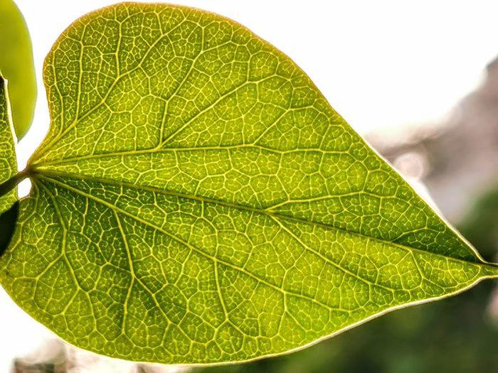 Macro shot of leaf
