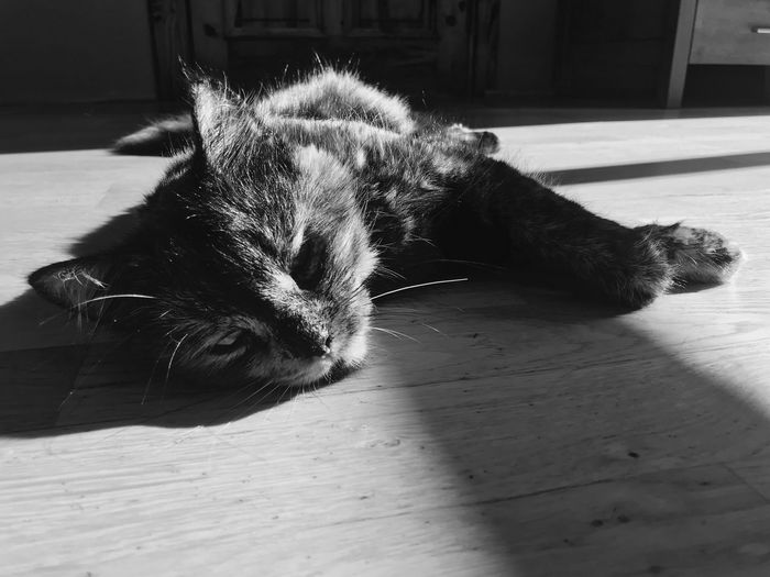 Raimonds Cat