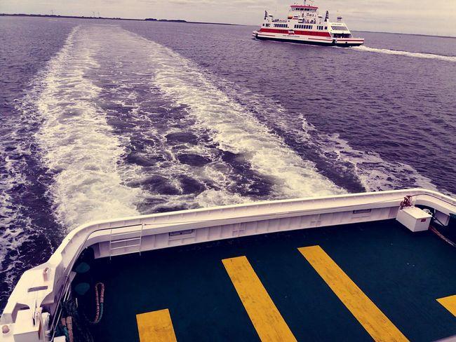 Heading Home Insel Bienen  Zucht Zwanzig17