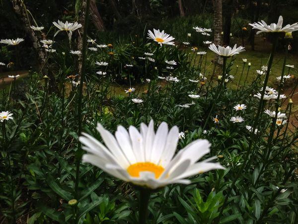 Landscape Nature Snapchat Flwoers EyeEm EyeEm Nature Lover EyeEm Flower Eyeemphotography