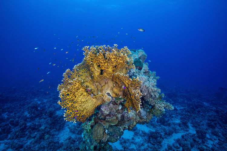 Beautiful corals photo taken against the blue