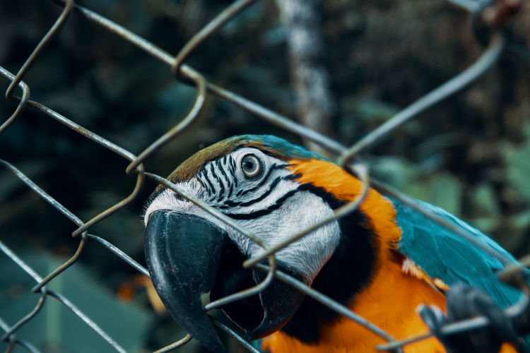 Close-up of parrot against fence at zoo
