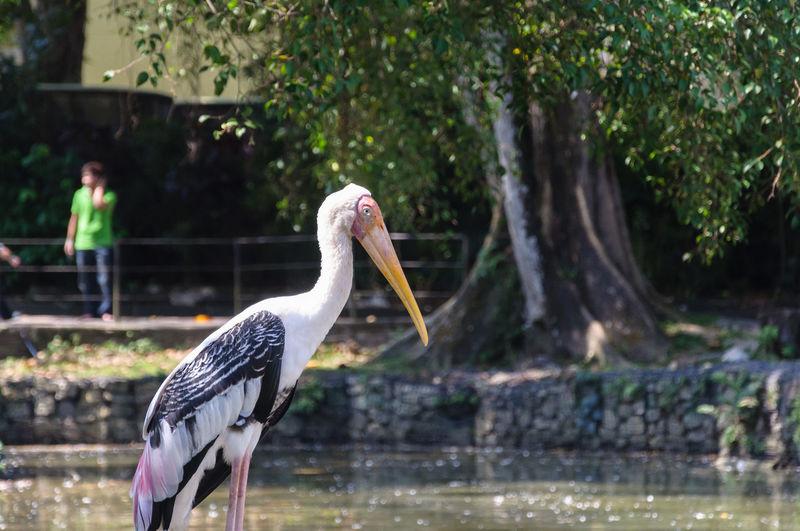 Bird on shore against trees