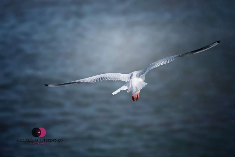 Flying Mid-air Bird Spread Wings Animal Wildlife Animals In The Wild No People Outdoors Animal Themes Day Nature Foto Photography Bestoftheday EyeEm Best Shots Animal Love Animal Photography Magdalena Teterdynko Photo Water Cloud Cloudy EyeEm Nature Weather