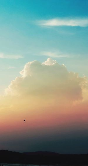 serenity Bird Flying Sunset Silhouette Adventure Awe Mid-air Sun Beauty Sky Only Calm Heaven Cloudscape Infinity Romantic Sky Streaming