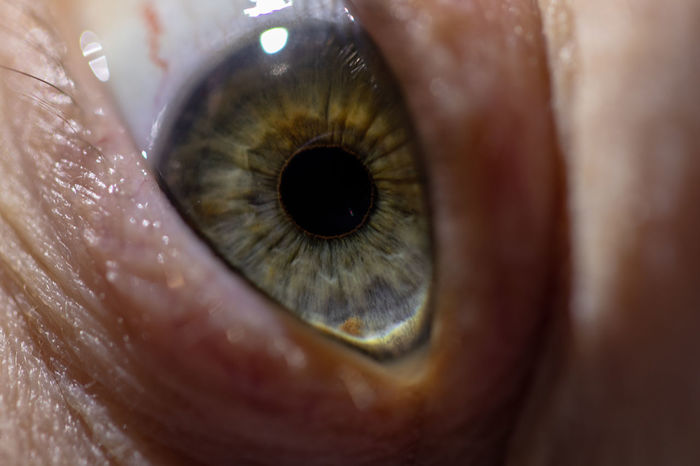 Iris - Eye Pupil Human Body Part Human Eye Eye Body Part Close-up Eyelash Eyeball Macro Unrecognizable Person Looking At Camera Adult Sensory Perception