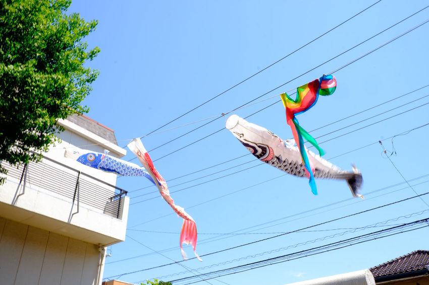 宝神社の鯉のぼり。北風が強くてちぎれそう。 Carp Streamer Carp Carp Streamer Fujifilm Fujifilm X-E2 Fujifilm_xseries Ichikawa Japan Japan Photography Japanese Culture Sky XF18-55mm 宝神社 市川 市川市 鯉のぼり