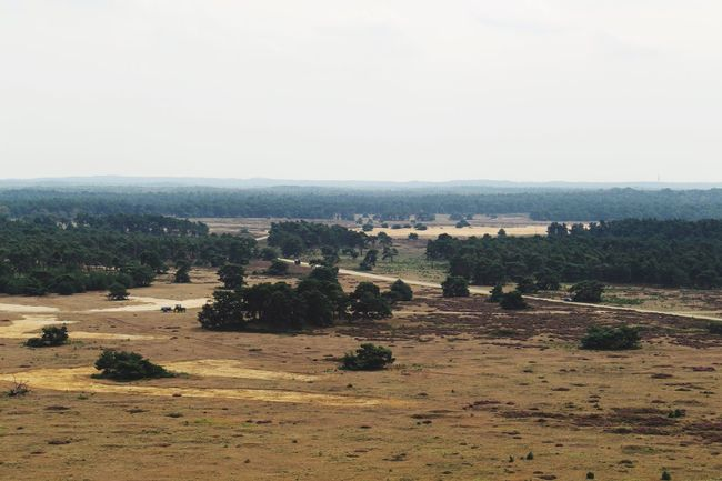 Veluwe Hogeveluwe View View From Above Viewpoint Dutch Sand Sand Dune Landscape Nature Tree Field Scenics No People Outdoors Tranquil Scene Tranquility Beauty In Nature Day Large Group Of Animals Agriculture Sky Rural Scene Animal Themes Domestic Animals Clear Sky Mammal Grass