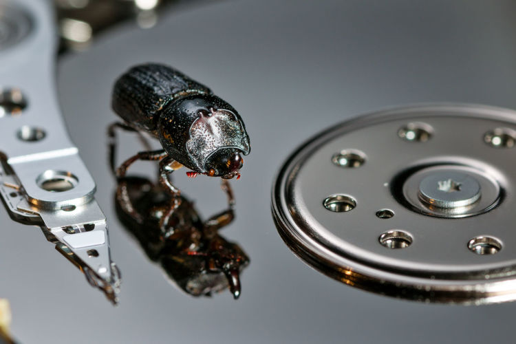 bug in the machine rhinoceros beetle Animal Animal Themes Animal Wildlife Close-up Communication Computer Computer Bug Computer Equipment Computer Part Hard Drive High Angle View Indoors  Insect Invertebrate Metal Nature No People Rhinoceros Beetle Shape Shiny Silver Colored Studio Shot Technology The Creative - 2018 EyeEm Awards Humanity Meets Technology